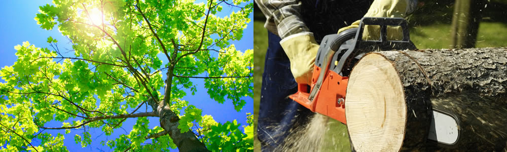 Tree Services Bradenton Beach